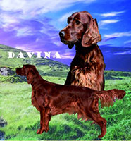 Davina Mystic Marvel of Greenland Creek